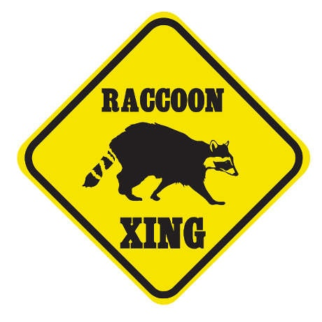 Crossing Raccoon Sign
