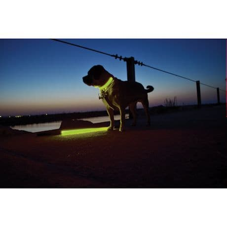 Light-Up Dog Collar