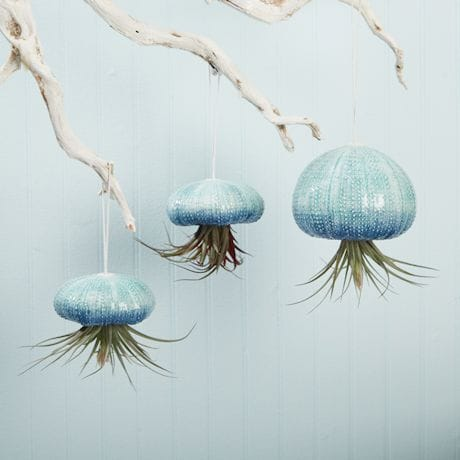 Hanging Jellyfish Ceramic Air Plant Holders - Set of 3