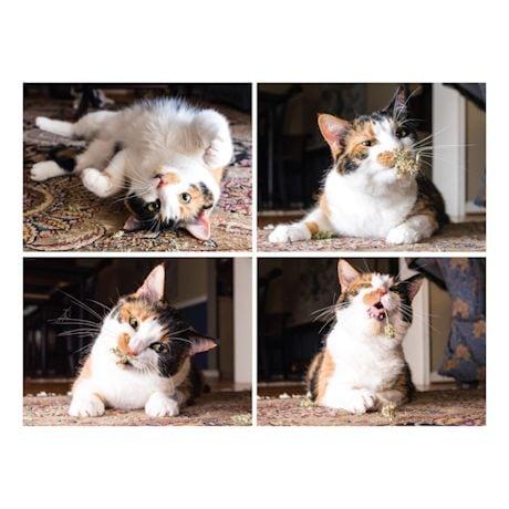 Cats On Catnip Book