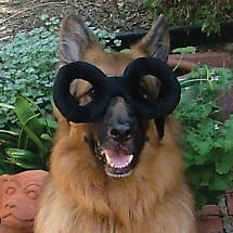 MY DOG IS A GENIUS DOGGIE GLASSES