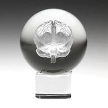 Laser Etched Brain Crystal Sphere